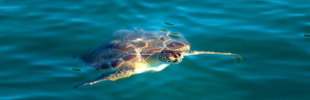 Slider_Turtle