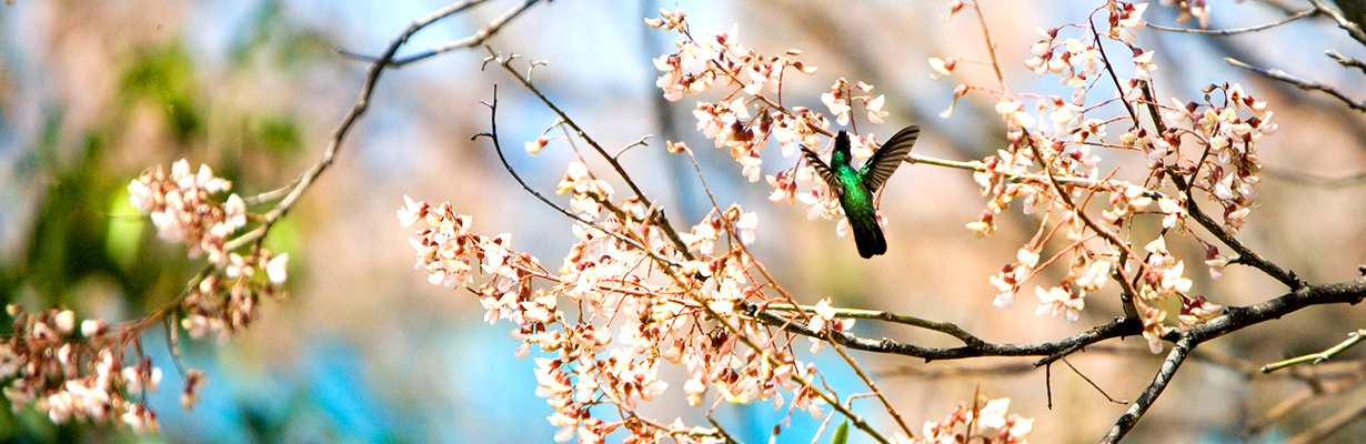 Slider_hummingbird